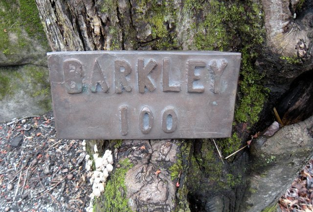 the-barkley-marathon-the-most-insanely-difficult-race-in-the-world